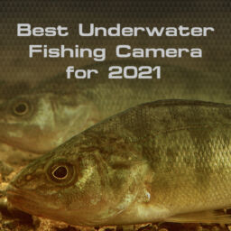 The Best Underwater Camera for 2021
